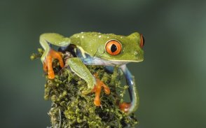 amphibians in animals worlds