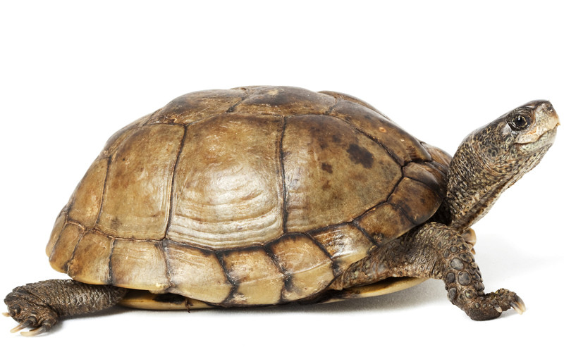 animal world tortoise