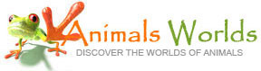 discover the worlds of animals