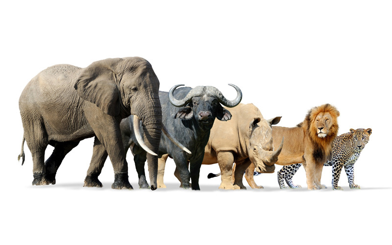 All about mammals information, definition & facts ...