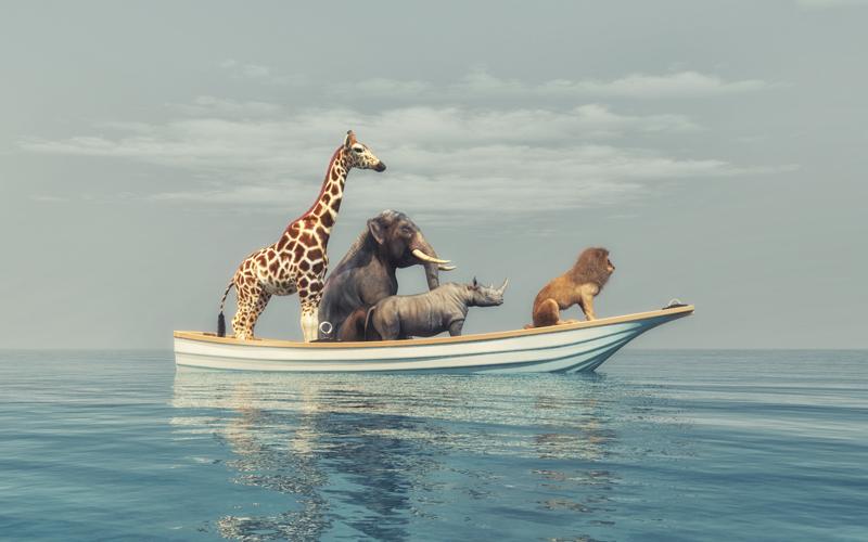 Mammals, Classificatio...