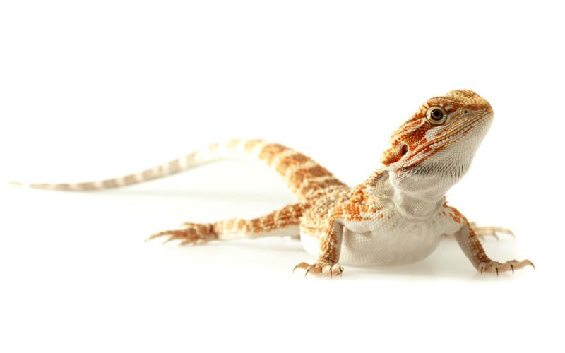 reptiles under animal