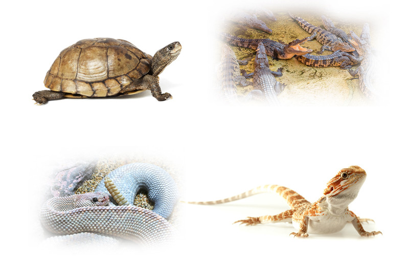 Image Gallery names of reptiles animals